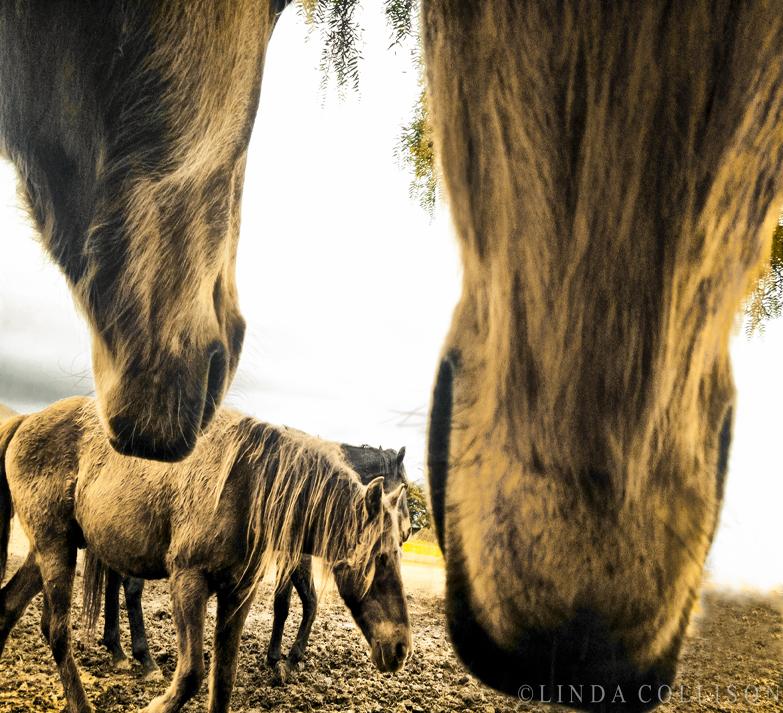 HorsePerspective
