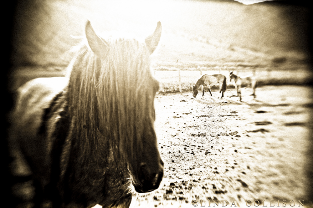 HorsesDream